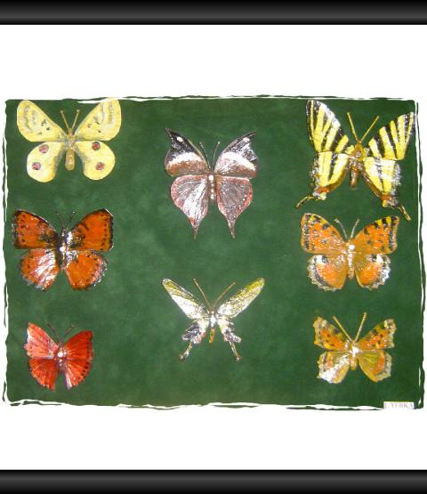 Papillons 3